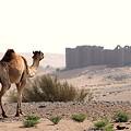 Photos: 砂漠の孤城3