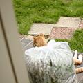 写真: 玄関に外猫茶色くん