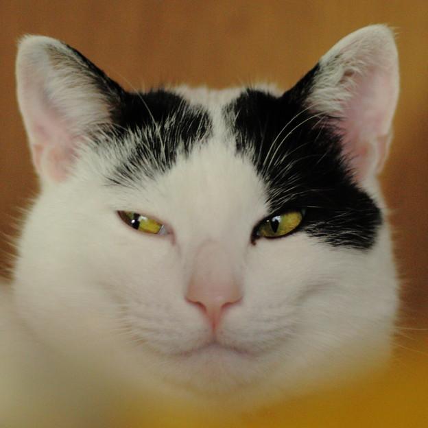 Photos: チラ見する猫