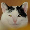 写真: チラ見する猫