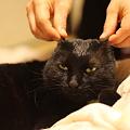 写真: 猫さま不機嫌
