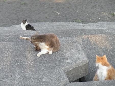 野良猫 散歩道