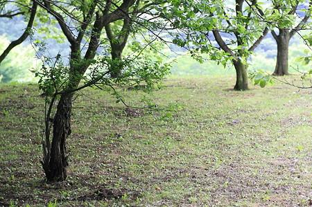 2011.05.13 追分市民の森 シジュウカラのいる風景