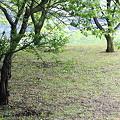 写真: 2011.05.13 追分市民の森 シジュウカラのいる風景