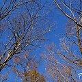 写真: 冬木立ち・・