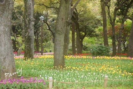 横浜公園のチューリップ 20