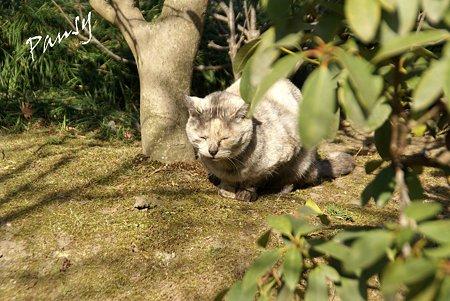 gray の猫・・浄妙寺3