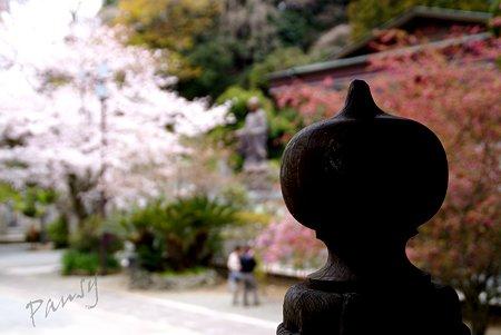 妙本寺の桜景色・・7