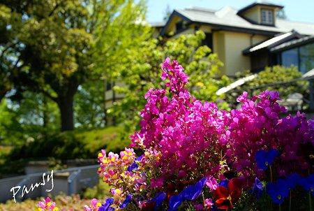 山手イタリア山庭園・・5
