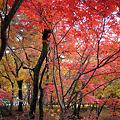 09年京都