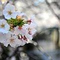 写真: まだまだ咲くよ~