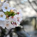 Photos: まだまだ咲くよ~