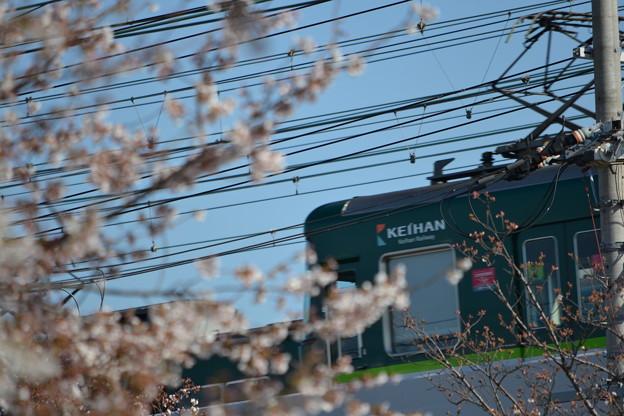 桜と京阪電車