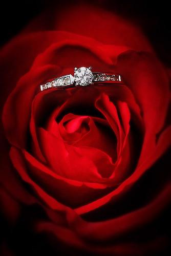 RING & ROSE