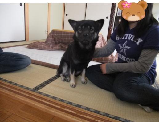 Photos: お姉さんワンコ