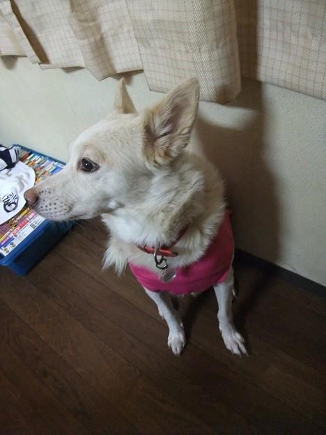 写真: 蓮君、ピンク似合うよ~
