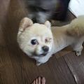 Photos: 柚子だろうか、ポン子だろうが、何にでも反応するんだけどね(汗)