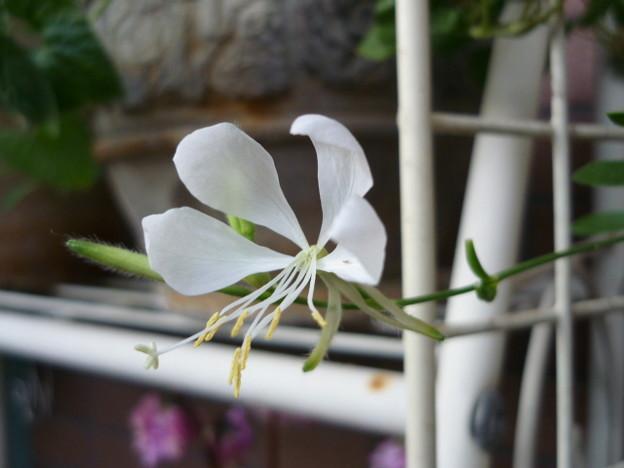 2011.11 garden 080