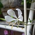 Photos: 2011.11 garden 080