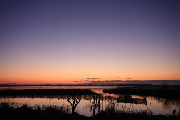紫の夜明け前