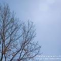 Photos: 冬空 木