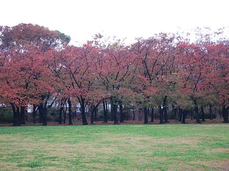 大坂城・西の丸庭園 - 03