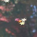 写真: 洞光寺 - 012