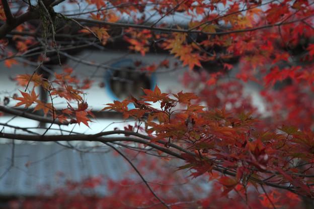 写真: 円通寺 - 08