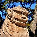 Photos: 住吉大社太鼓橋の狛犬吽形