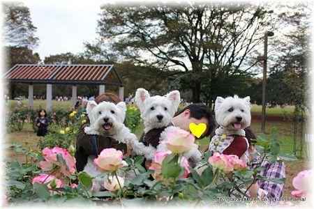 薔薇の代々木公園