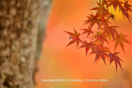 宝福寺の紅葉 (6)