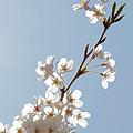 Photos: 天空に咲く