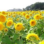 flower0610