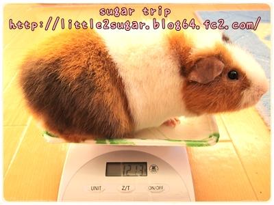 まろんの体重2