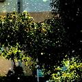 晴れ時々雨と雪