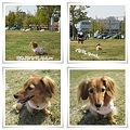 写真: 20111008 お散歩2