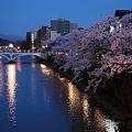 浅野川大橋と満開のソメイヨシノ