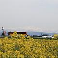 Photos: 菜の花畑と国道&白山が見えました♪