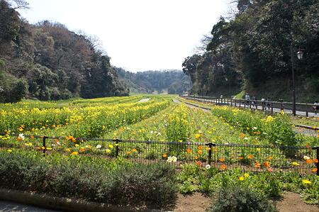 急斜面の花畑