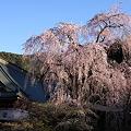 Photos: 桜巡礼`12'(身延、久遠寺、ラスト編)-3