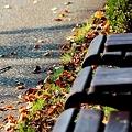 写真: 道の隅の落ち葉を眺めて
