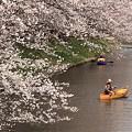 Photos: 春爛漫 #1