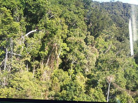 スカイレールから見た熱帯雨林 3